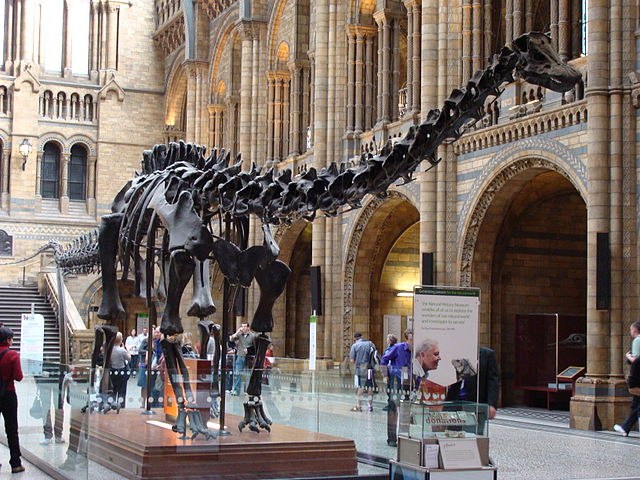 You are browsing images from the article: Natural History Museum - jedno z trzech wielkich londyńskich muzeów