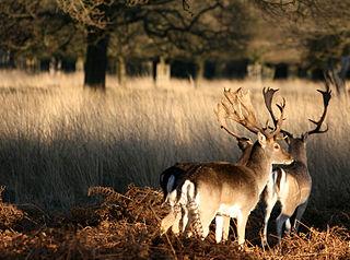 You are browsing images from the article: Richmond Park w Londynie - największy z królewskich parków