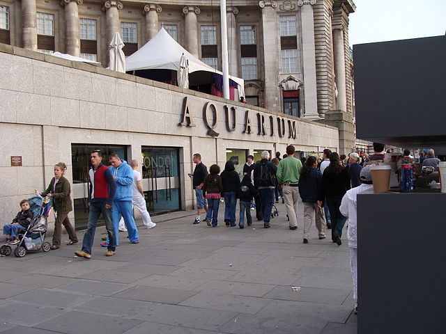 You are browsing images from the article: Sea Life London Aquarium - ogromne akwarium w centrum stolicy