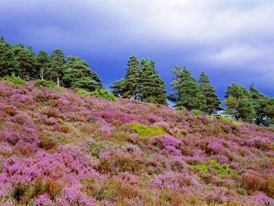 You are browsing images from the article: Cairngorms National Park - największy Park Narodowy w Wielkiej Brytanii