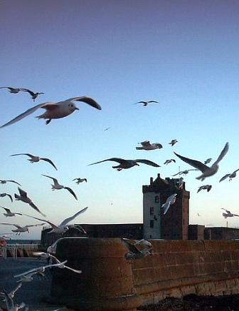 You are browsing images from the article: Broughty Castle - twierdza obronna miasta Dundee