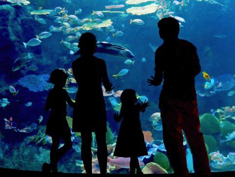 Oceanaria i akwaria w Anglii