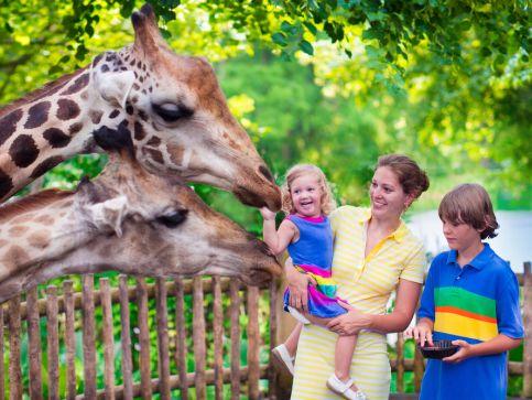 Zoo i ogrody zoologiczne w Anglii
