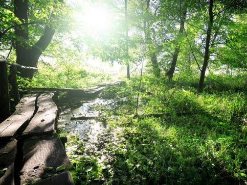 Parki regionalne i krajobrazowe w Szkocji