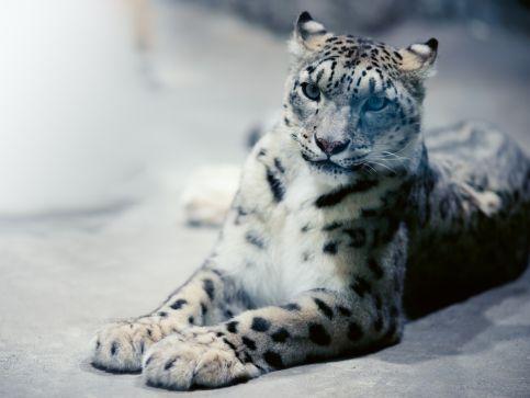 Zoo i ogrody zoologiczne w Walii